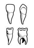Dental design. Over beige background, vector illustration Royalty Free Stock Photos