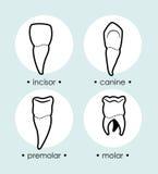 Dental design. Over blue background, vector illustration Stock Image