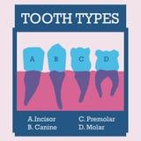 Dental design. Over pink background, vector illustration Royalty Free Stock Image