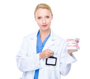 Dental doctor with denture Stock Photos