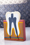 Dental equipment, teeth care and control Royalty Free Stock Image
