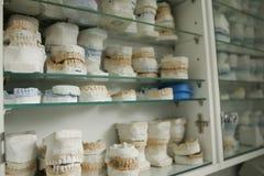 Dental gypsum models. Dentist's office royalty free stock image