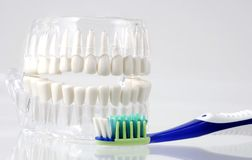 Dental Hygiene Stock Photos