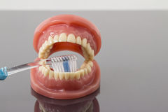 Dental hygiene and cleanliness concept. With a toothbrush placed between the teeth on a set of toy plastic false teeth or dentures over a grey background with Royalty Free Stock Photography