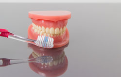 Dental hygiene and cleanliness concept. With a toothbrush placed between the teeth on a set of toy plastic false teeth or dentures over a grey background with Stock Images
