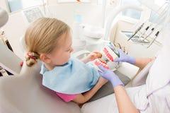 Dental hygiene. Dentist demonstrating tooth brushing Royalty Free Stock Images