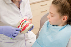 Dental hygiene. Dentist demonstrating tooth brushing Royalty Free Stock Image