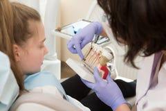 Dental hygiene. Dentist demonstrating tooth brushing Stock Images