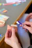 Dental hygiene. Practical lesson at the dental department for dental hygiene Royalty Free Stock Image