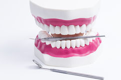 Dental. Image shows a set of iron instruments with set of teeth royalty free stock photos