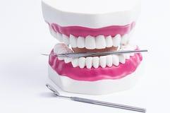 Dental Royalty Free Stock Photos