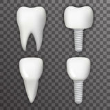 Dental Implant Realistic 3d Tooth Poster Transperent Stomatology Icon Template Background Mock Up Design Vector Royalty Free Stock Photography