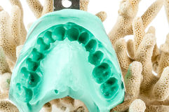 Dental impression Royalty Free Stock Photography