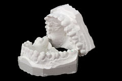 Dental impression chalk model Royalty Free Stock Images