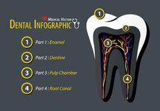Dental Infographic . Flat design . Stock Images