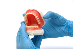 Dental instruments. Dentures and medical tools Stock Photography
