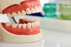 Dental jaw Stock Photos