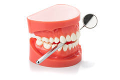 Dental jaw model dental mirror Royalty Free Stock Image