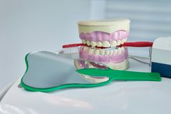 Dental jaw model. Dental care concept background royalty free stock image