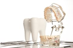 Dental jaw model and medical dental equipment. Tool on white background, concept image of dental background. dental hygiene background Royalty Free Stock Images