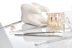 Dental jaw model and medical dental equipment. Tool on white background, concept image of dental background. dental hygiene background Stock Images