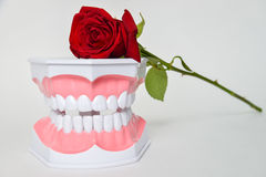 Dental jaw and rose flower, dentist day celebration picture Stock Photo