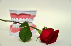 Dental jaw and rose flower, dentist day celebration picture Royalty Free Stock Images