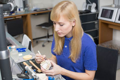 Dental lab technician applying porcelain to dentition mold Royalty Free Stock Image