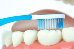 Dental model object with toothbrush Royalty Free Stock Photos