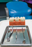 Dental model,teeth model Stock Photo