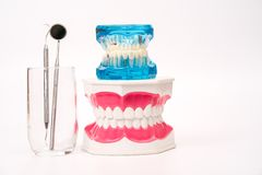 Dental model and dental tool Royalty Free Stock Images