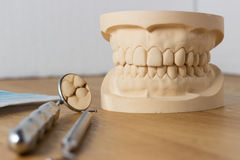 Dental mold with dental tools. Dental mold of a set of false teeth with dental tools on a wooden table arranged so that the mirror reflects the teeth in a Royalty Free Stock Photo