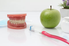 Dental mold with toothbrush and a apple. Tooth shape. The teeth of the upper and lower jaw with toothbrush and an apple and flossing In the background is a Stock Photography