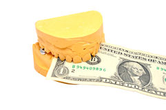 Dental mould and dollar Royalty Free Stock Photography