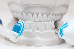 Dental mould Stock Photo