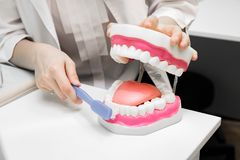 Dental office. Dentist brushes teeth with toothbrush royalty free stock image