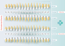 Dental and Periodontal Charting Royalty Free Stock Images