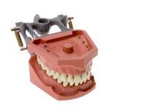 Dental plates or teeth Royalty Free Stock Photo