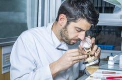 Dental technician applying ceramics to teeth in the dental model Stock Photography