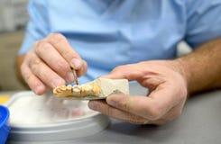 Dental technician in dental laboratory Royalty Free Stock Image
