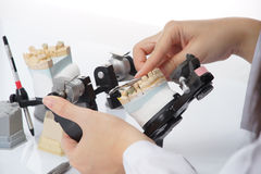 Dental technician working with articulator in dental laboratory Royalty Free Stock Image