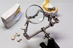 Dental teeth model under work Stock Image