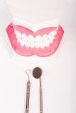 Dental tool and dental model Royalty Free Stock Image