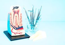 Dental tools and tooth anatomy. Dental tools and tooth anatomy on blue background royalty free stock image
