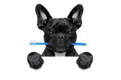 Dental toothbrush dog Royalty Free Stock Photo