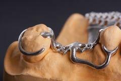 Dental wax model Royalty Free Stock Image