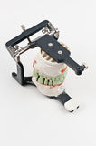 Dental wax model on support Royalty Free Stock Photos