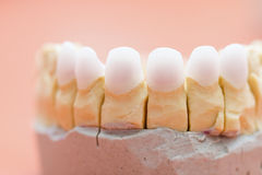 Zircon teeth Stock Image