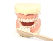 dentale fotografia stock
