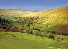 Dentdale Stock Photos